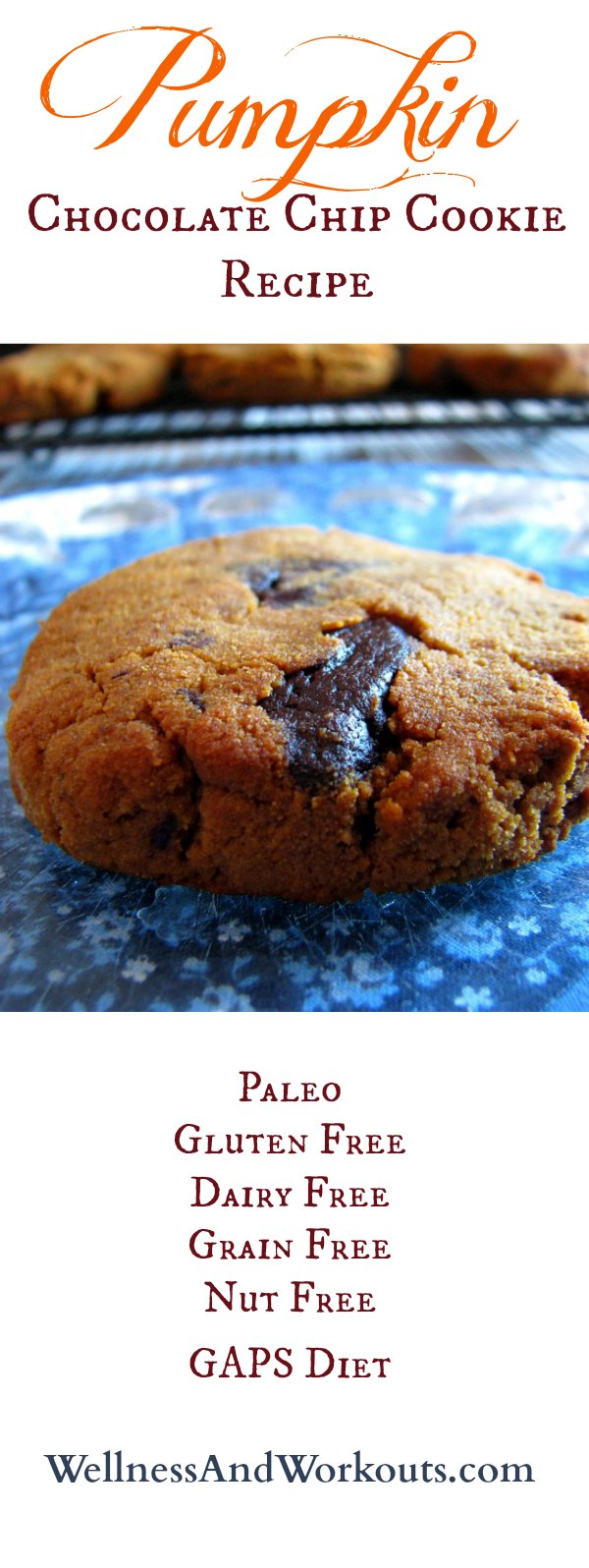 Healthy, soft, pumpkin chocolate chip cookie recipe with lots of coconut goodness! Gluten free, Paleo, Grain Free, Dairy Free, GAPS Diet & Nut Free. DELICIOUS! #paleo #healthyrecipe #glutenfree